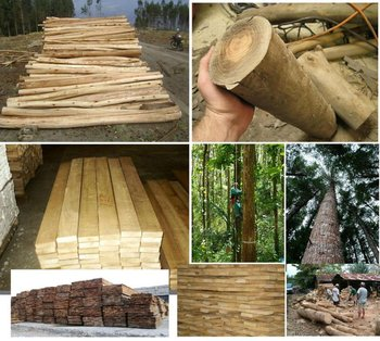Timber Logs Wood Furnitures Buy Gmelina Logs Other Logs And