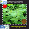 Free Sample Plant Extract Climbing Nightshade Extract