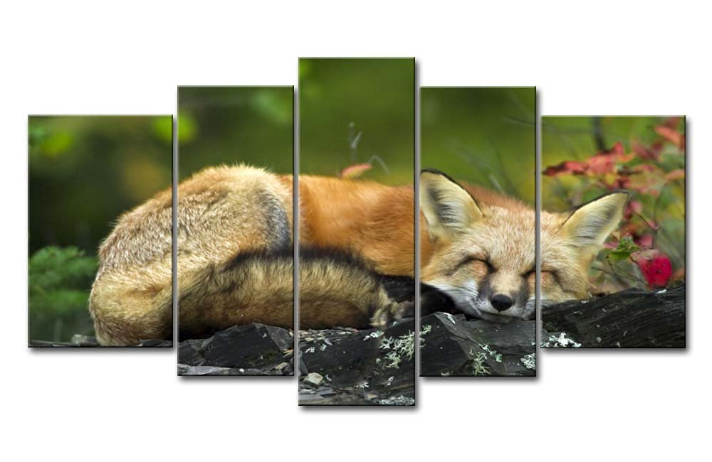 5 Panel Wall Art Painting Sleeping Red Fox Pictures Prints On Canvas Animal The Picture Decor Oil For Home Modern Decoration Print