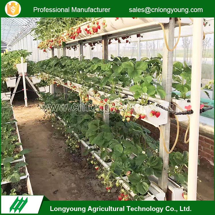 Vegetable Greenhouse Design on hydroponic greenhouse design, high tunnel greenhouse design, citrus greenhouse design, raised bed greenhouse design, poultry house design, vegetable flowers, strawberry greenhouse design, vegetable gardening, vintage greenhouse design, garden greenhouse design, mushroom design, vegetable hydroponics,