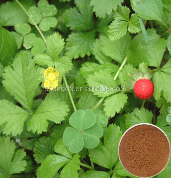 Pharmaceutical grade oldenlandia diffusa extract /Spreading Hedyotis Extract