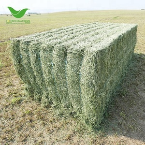 T&H high quality alfalfa hay for sale