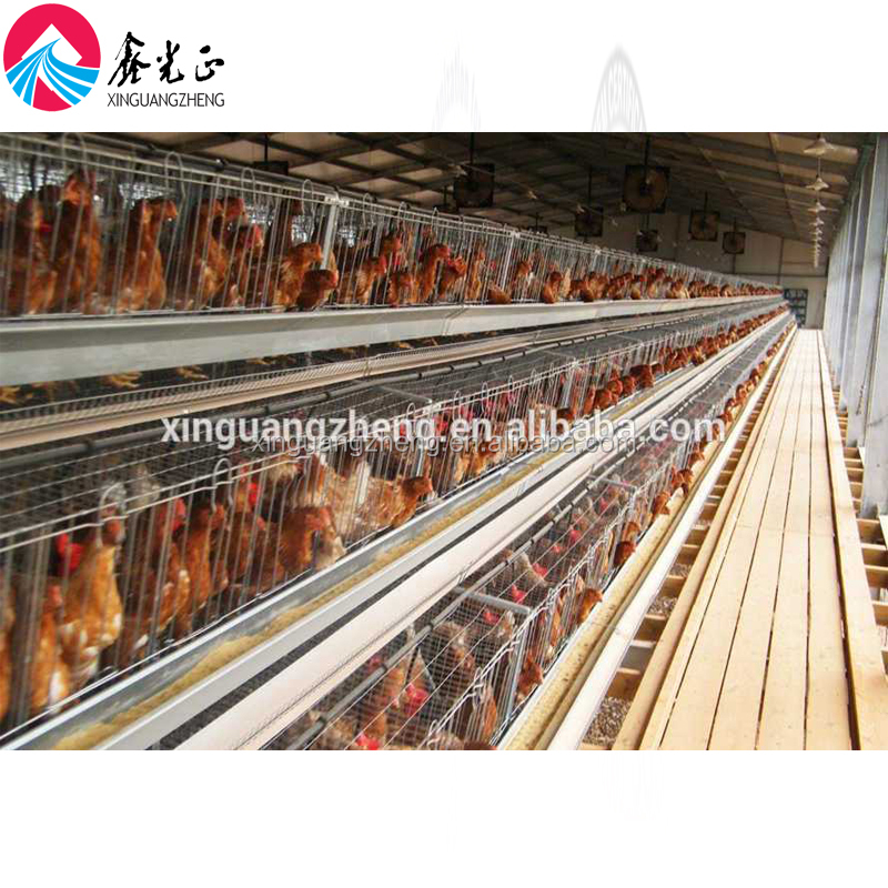 ブロイラー養鶏農家デザイン農業用機器割引