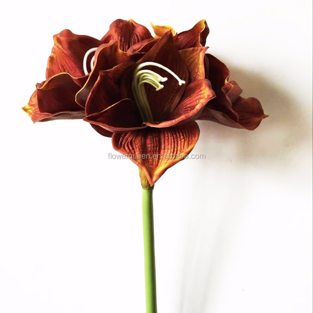 China amaryllis china amaryllis manufacturers and suppliers on china amaryllis china amaryllis manufacturers and suppliers on alibaba junglespirit Images