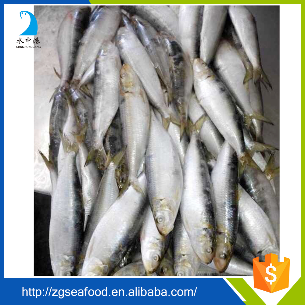 Nutritious Seafood Frozen QS Sardine Fish and all types of sardine