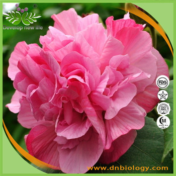 Dn Biology Supply Hibiscus Flowers Extracthibiscus Sabdariffa
