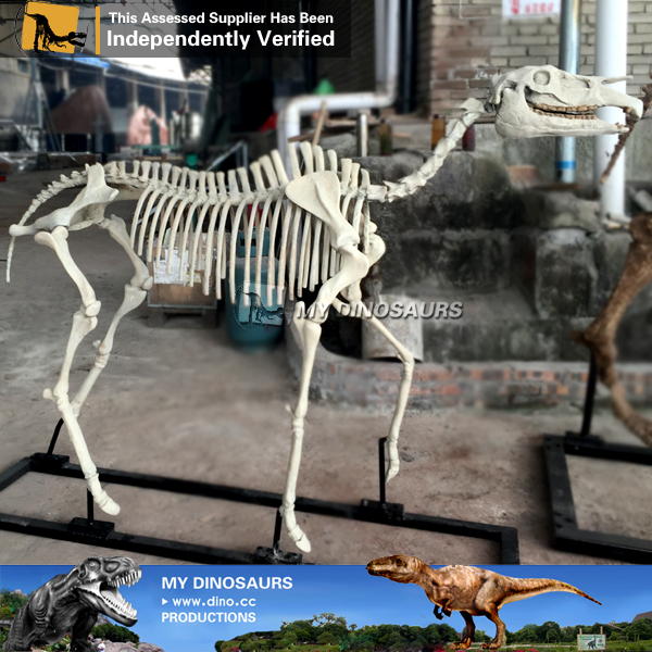 My Dino-C054 Resin horse skeleton model for sale