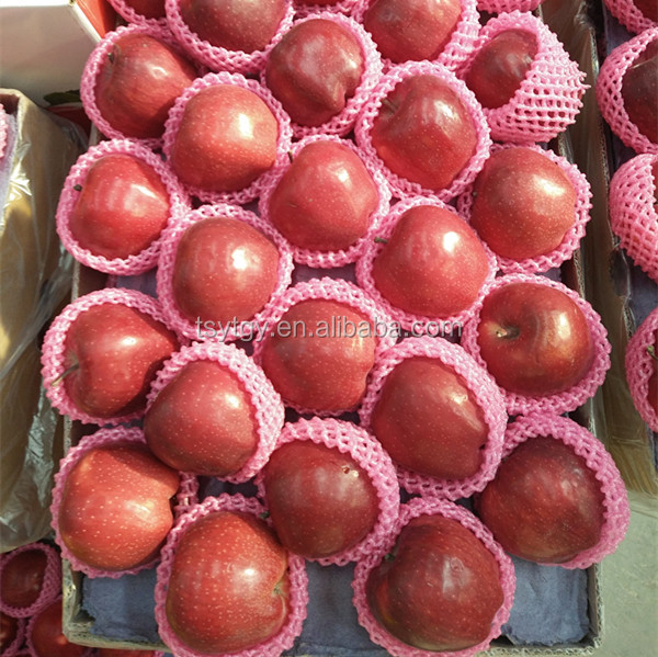 Red Color and Common Cultivation Type red delicious apple