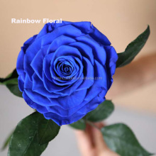 huge size royal blue preserved rose elegant in style artificial rose flower exporting from China