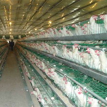 A and H types of Poultry House(ISO9001) with Automatic Machine