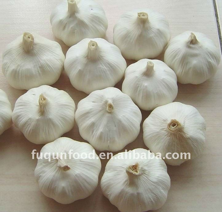 High quality Chinese garlic 2012 crop
