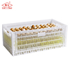 Collapsible poultry transport chicken storage plastic crate for logistic
