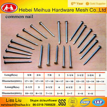 China factory common wire nail/common nail for construction/common nail with competitive price