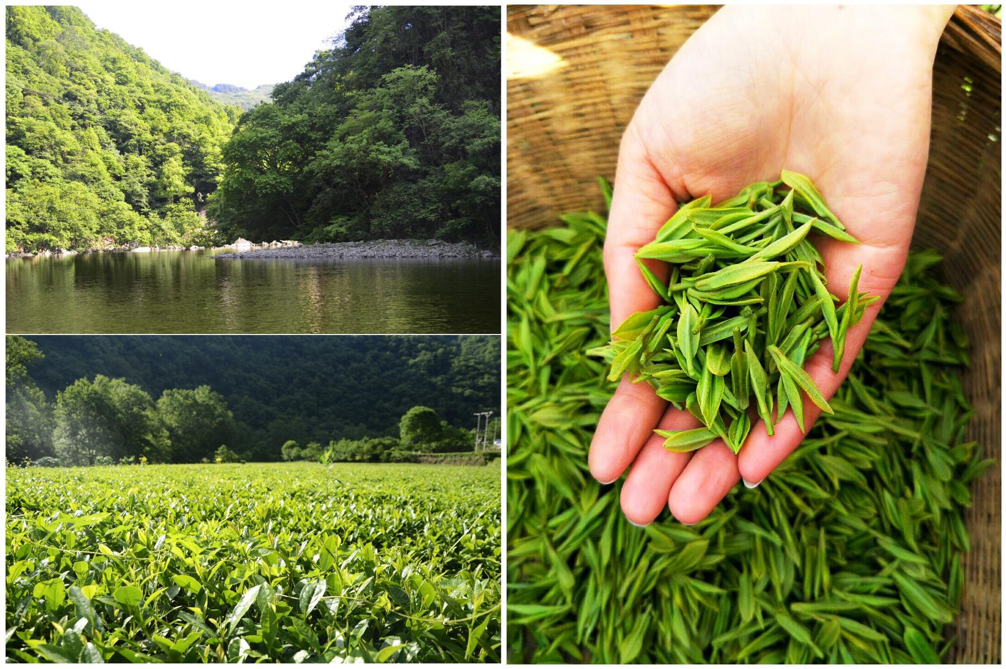 AAAA black our company want distributor home & garden herbal kids trolley tea detox herbal chinese gift energy black tea - 4uTea | 4uTea.com