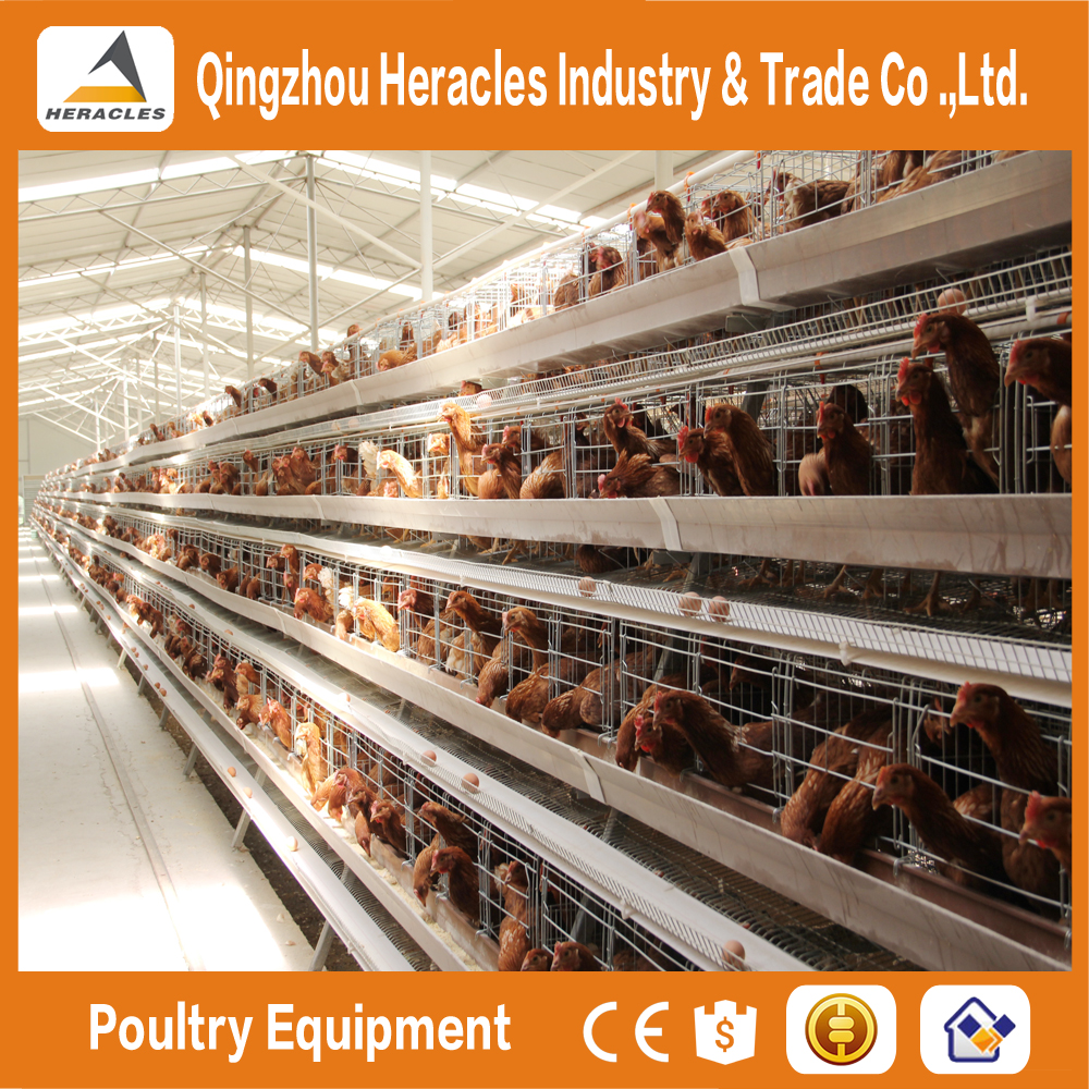 Heracles company price A type bird cage--poultry cage layer chickens