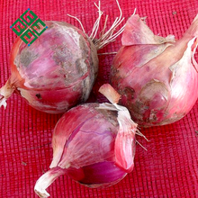 types of bulb fresh white onion