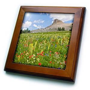 Danita Delimont - Wildflower - Wyoming, Grand Teton National Park, Spearhead Peak - 8x8 Framed Tile (ft_231867_1)