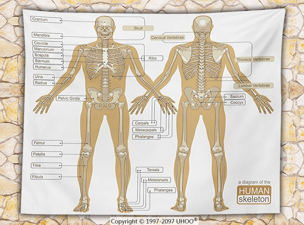 get quotations · human anatomy fleece throw blanket diagram of human  skeleton system with titled main parts of body