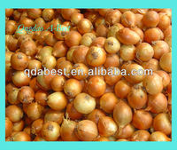 Buy Yellow Onion in China on Alibaba.com