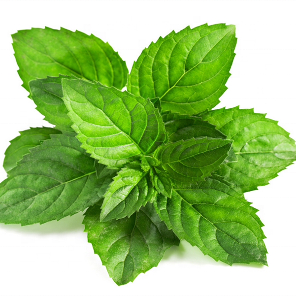 Best selling/High quality/100% pure peppermint essential oil