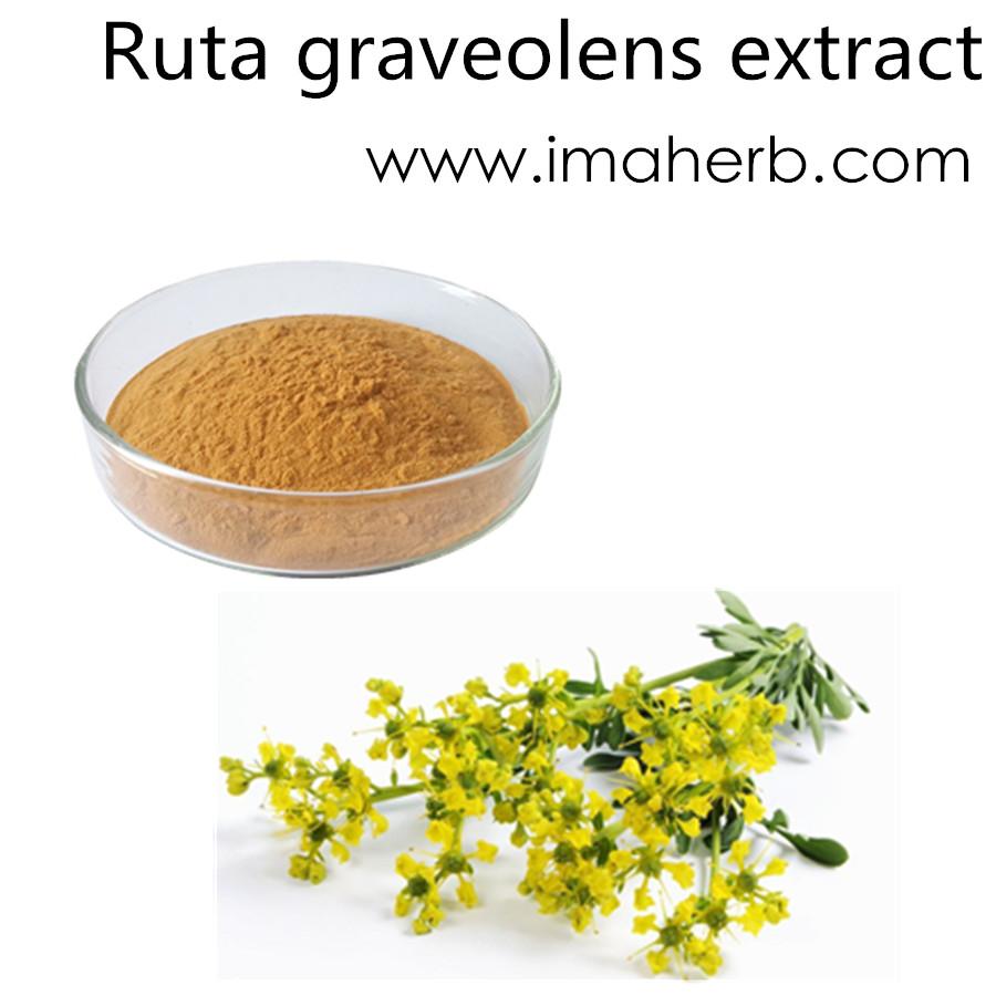 High Quality EP Standard ruta graveolens extract price