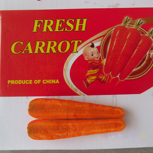 Fresh Carrot Price / Indian Fresh Carrot / Carrot Suppliers In China