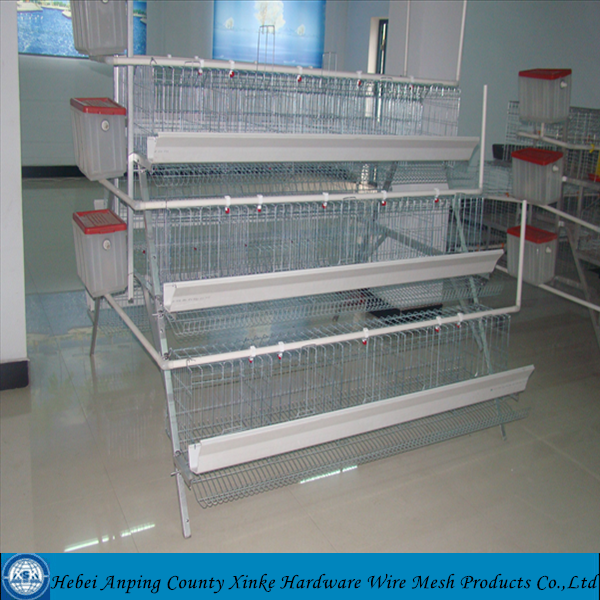 A Type Layers Poultry Cages And Design Layer Chicken Cages