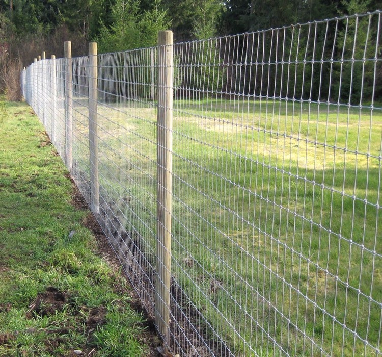 Intensity high galvanized sheep wire mesh fence buy