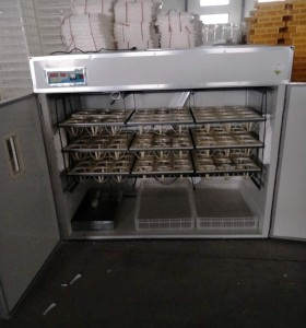 108 Ostrich egg incubator for sale
