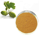 Factory supply high quality tannin extract powder with reasonable price and fast delivery on hot selling !!