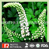 Pure Natural black cohosh plant extract cimicifugoside