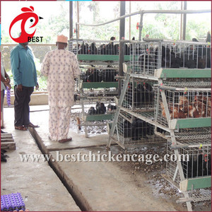 Hot sale dimension for 1000 chicken layer cage