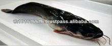 Best Quality Seafood Product Natural Whole Frozen Catfish