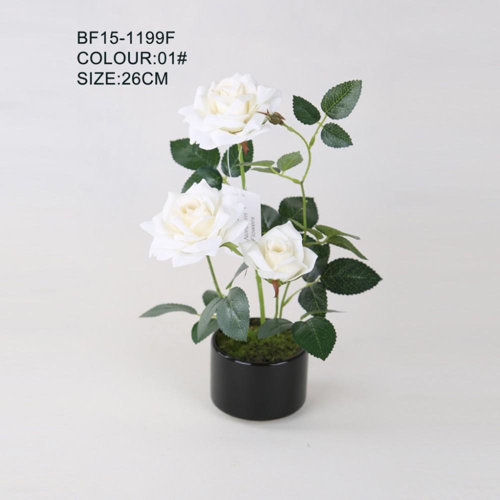 80+ Gambar Bunga Mawar Ukuran Kecil Paling Baru