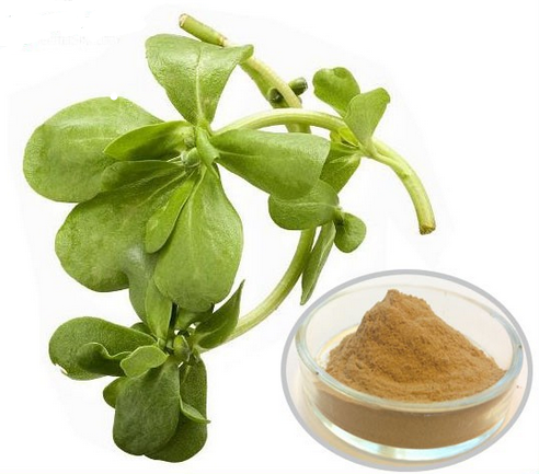 Natural Bacopa Monnieri Extract Saponins 50% powder
