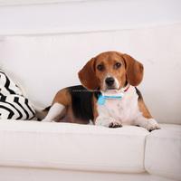 Dog diapers Pomeranian translator