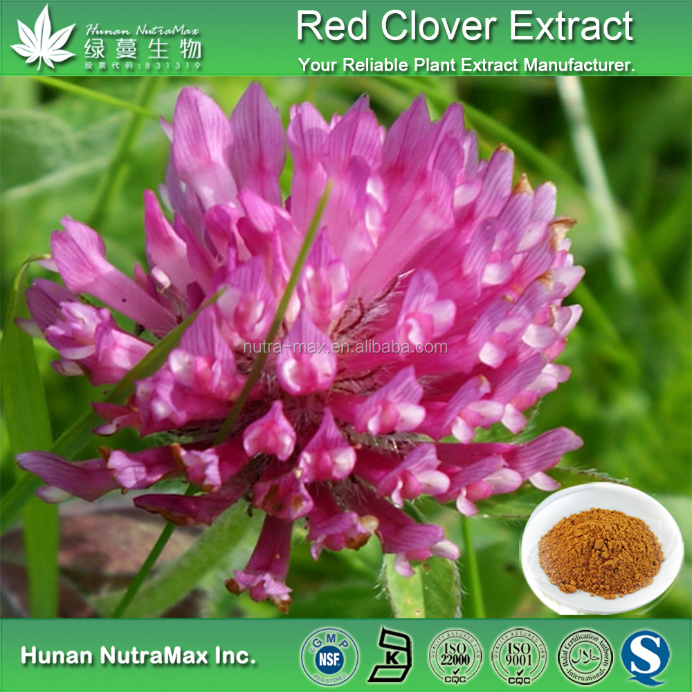 Top Quality Red Clover Powder Extract P E Product On Alibaba