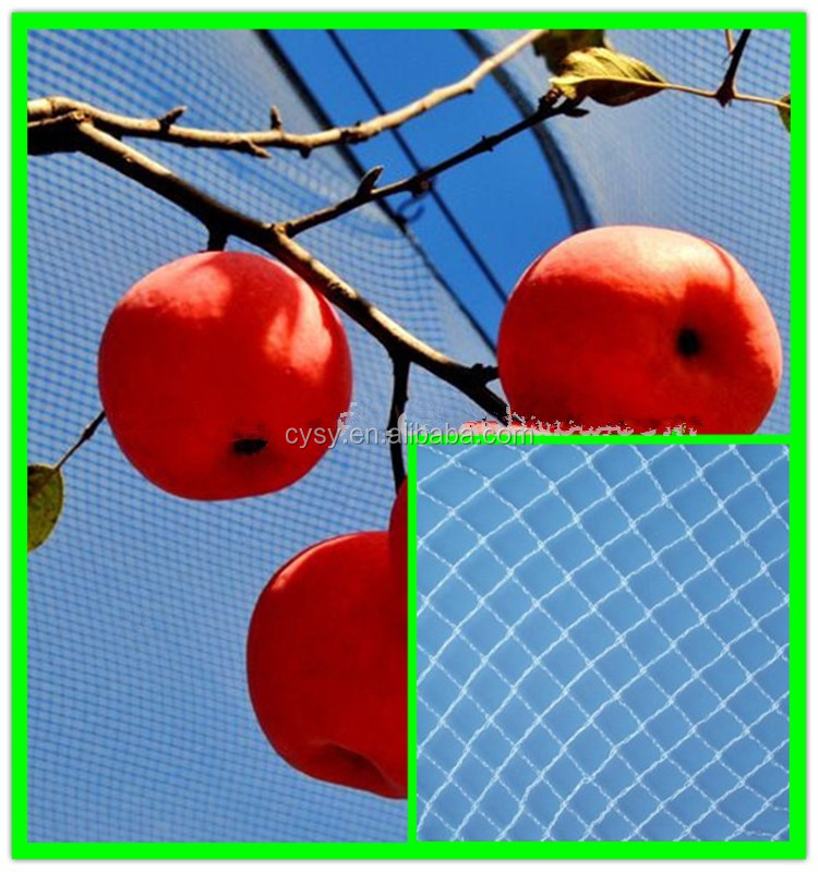 Green Plastic Apple Tree Anti Hail Net Hail Protection Net Buy Green Plastic Apple Tree Anti Hail Net Hail Protection Net Apple Tree Anti Hail Net