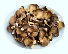 Cultivated Dried Even Oyster Mushroom Price