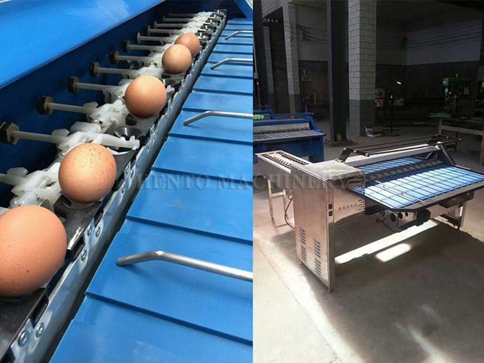 HENTO Factory Egg Sorting Machine / Egg Grading Machine Price For Sale