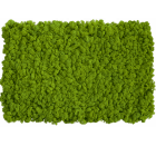 Organic nature eternal wholesale preserved moss wall decoration