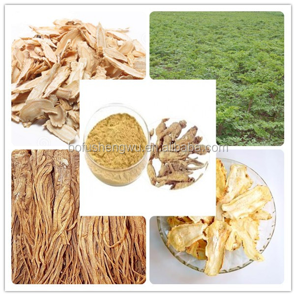 angelica dong quai extract/pure natural angelica extract/plant extract angelica