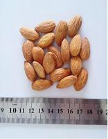 Almond kernel price whole sale, almond flour