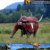 MY Dino-N160 Customized simulation animal cartoon animal cow cattle statue for decoration