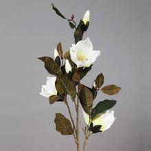 orchidee 1m