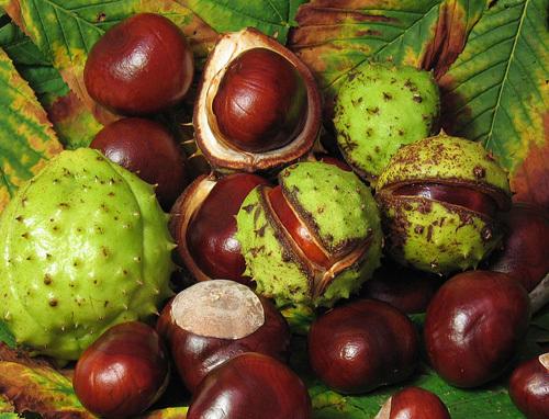 Pharmaceutical Grade Garcinia Cambogia Fruit Peel Extract 50 60 Hca Hydroxycitric Acid Buy Garcinia Cambogia Hca Hydroxycitric Acid Hca Product On