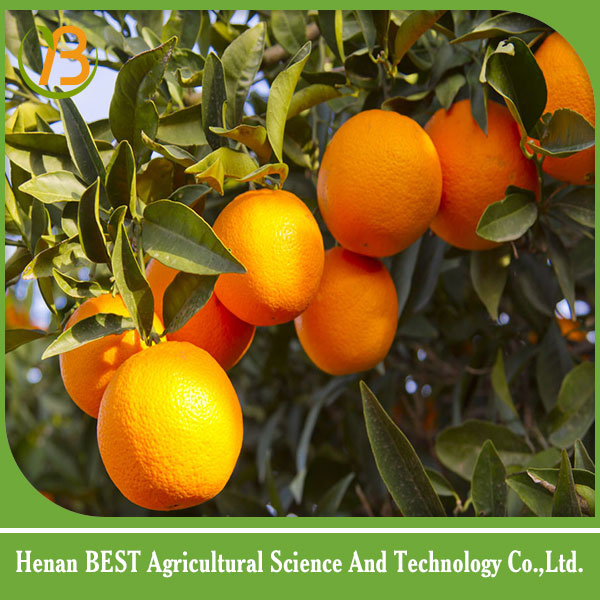 2017 new crop egyptian navel orange/best price fresh navel orange