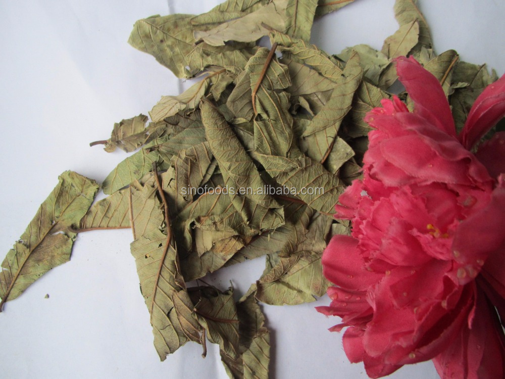 Chinese medicine for Fan shi liu Guava fruit with Dry Guava leaf