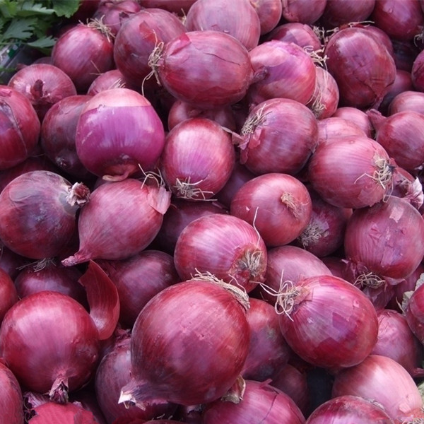 Hot sale red onion seeds