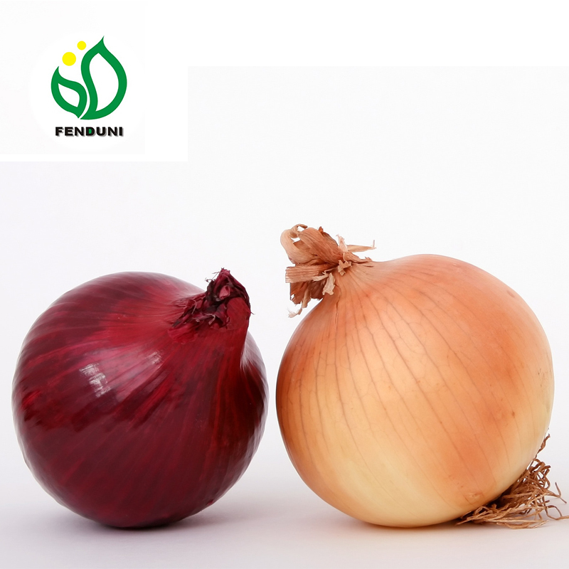 spring fresh onions from China ( red onion& white onion)